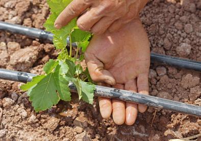 云南元谋:高效节水灌溉助农增收致富