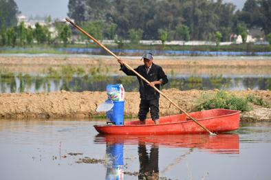 稻田裏撐船為哪般?